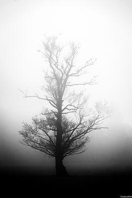 nature_.jpg