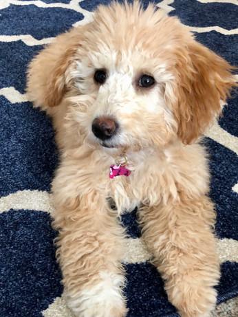 Leah's pup 2