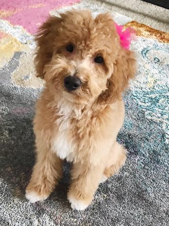 Abby's pup 3