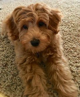 Abby's pup 15