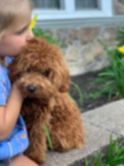 Opal's puppy 14