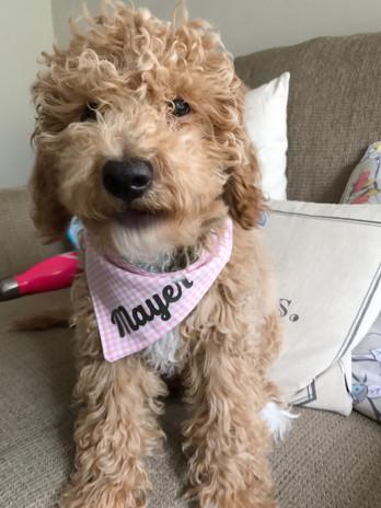 Abby's pup 7