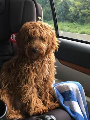 Abby's pup 16