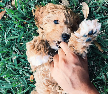 Abby's pup