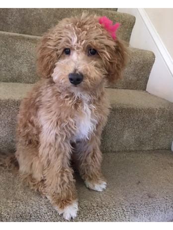 Abby's pup 5