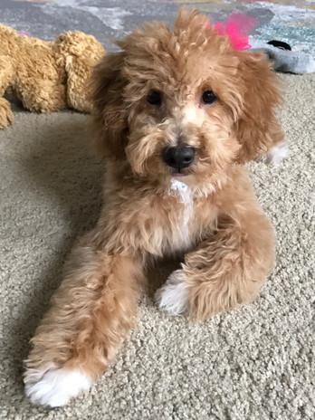 Abby's pup 4