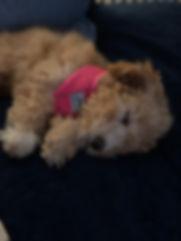 Peton asleep.JPG