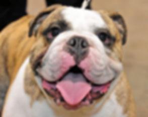 bulldog welcome.jpg