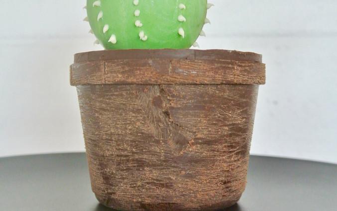 mr. cactus