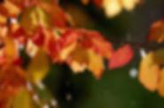 Fall_Leaves-700x461.jpg