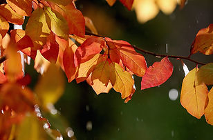 Fall_Leaves-700x461.jpg
