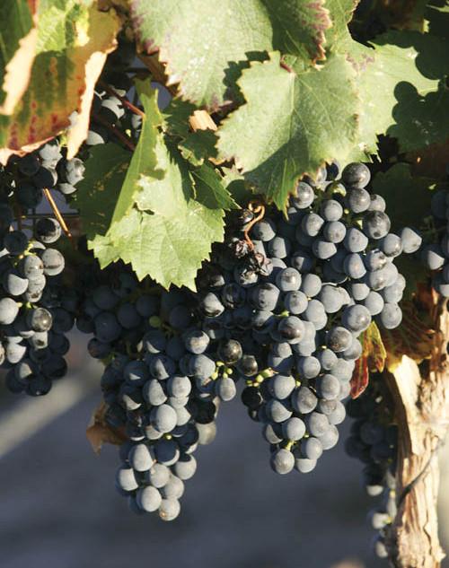 Antigal-Winery-11.jpg