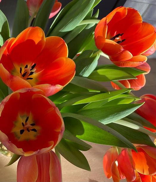 tulipanbakgrunn.jpg