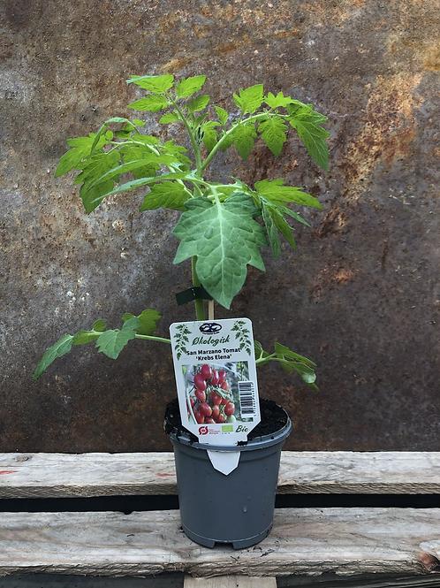 San Marzano Tomat 'Krebs Elena'