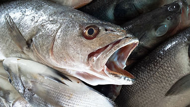 fish mouth.jpg
