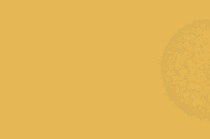 Cactus_site-03.png