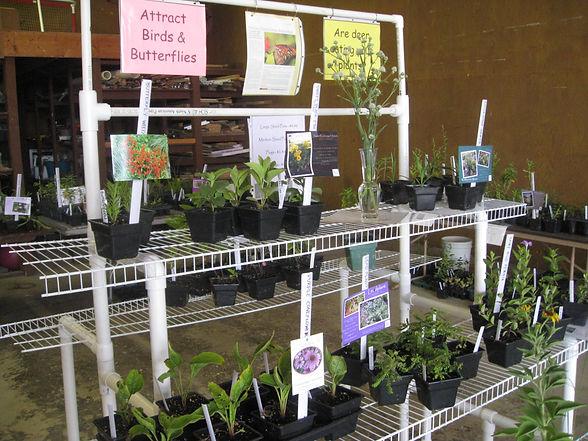 July 2013 Native Plant Sale 002.JPG