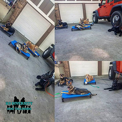 K9 Diversity Dog Training