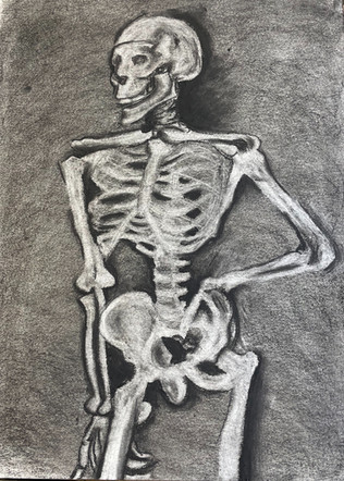 charcoal drawing of a posed skeleton