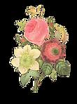 Illustratie van de bloem Reverse