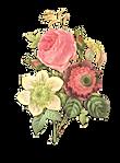 Reverso Ilustração da flor