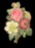 Blumen-Illustration umge