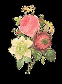 Flower Illustration Reverse