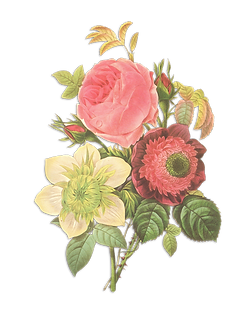 Flower Illustration Reverse