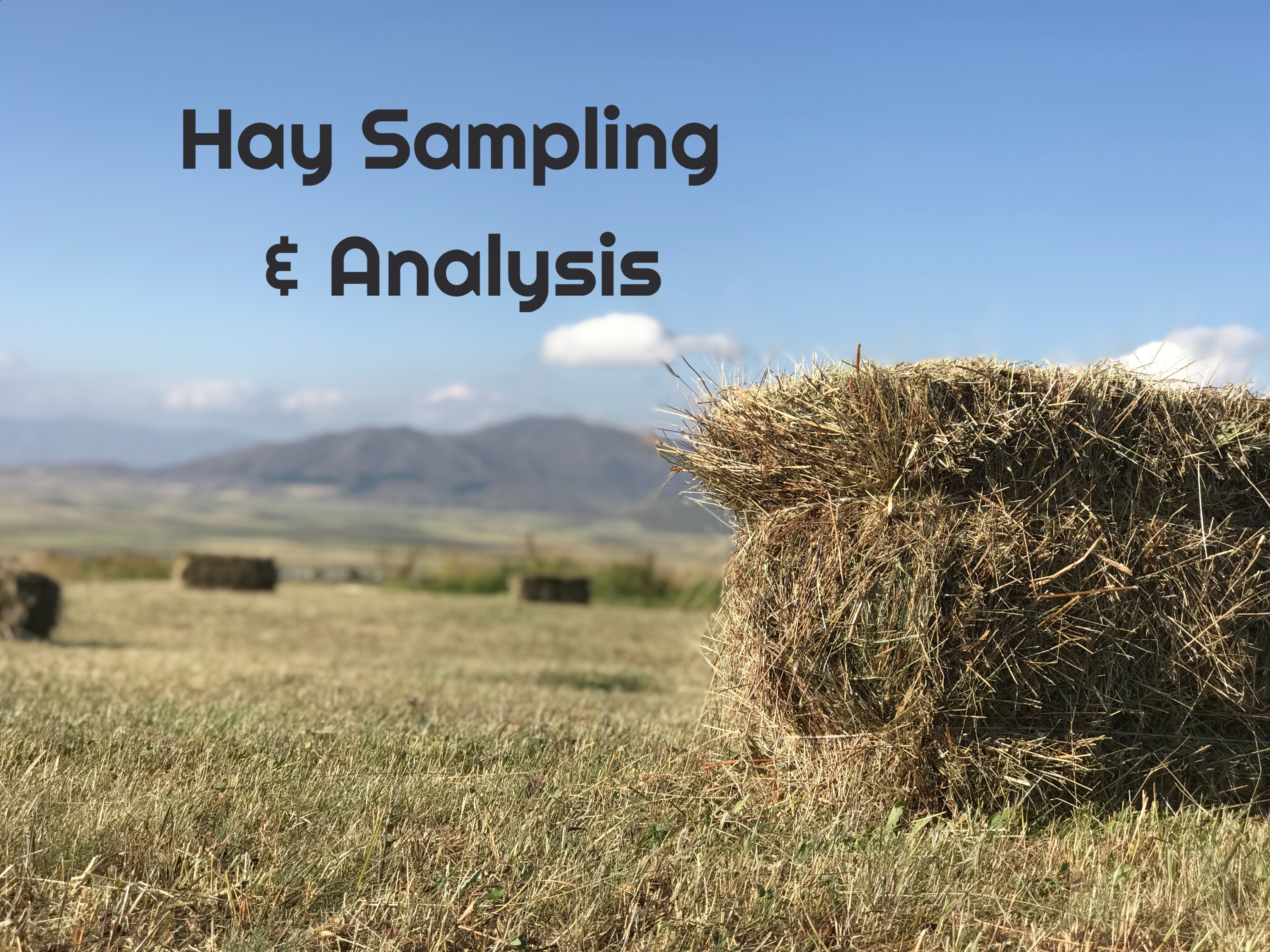 Hay Sample Analysis