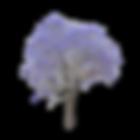 jacaranda logo.png