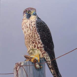 Peregrine Falcon and Sparrow