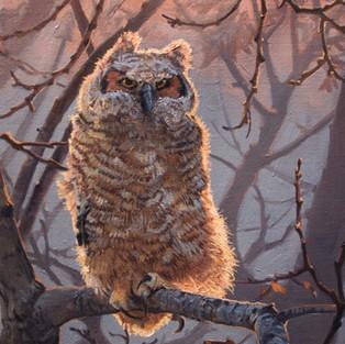 Great Horned Owlete