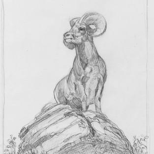 Long Horn Sheep