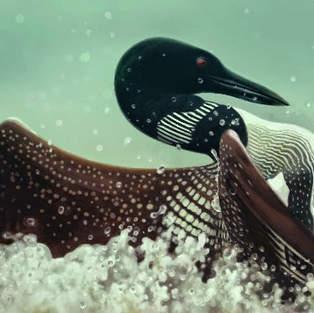 Loon Splashdown