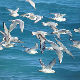 Gulls Over Lake Huron