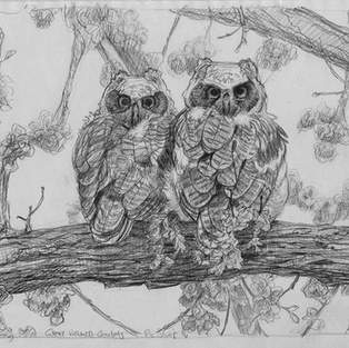 Owletes
