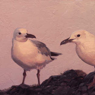Evening Gulls