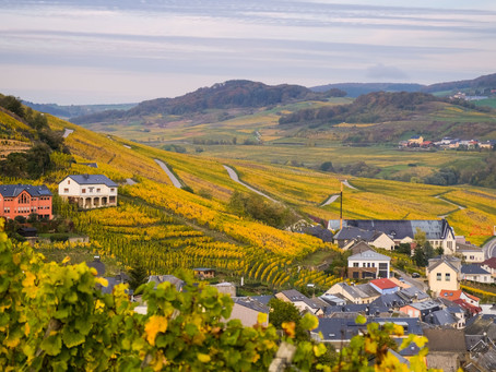 5 things you need to know about Luxembourgish wines
