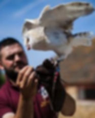 Museum Events include Birds of Prey display