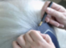 wigs2.jpg
