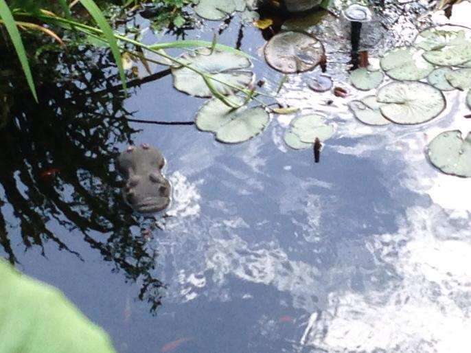 Huch, was schwimmt in unserem Teich_