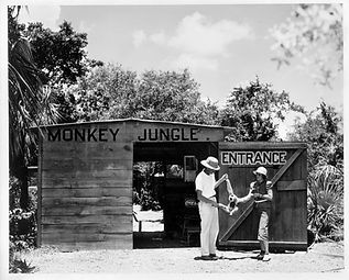 Monkey Jungle | Historic Landmark | Miami & South Florid | Tourist Attraction | Wildlife Park | Wildlife Conservancy | Animal Exhibits | Wildlife Attractions | Animal Shows