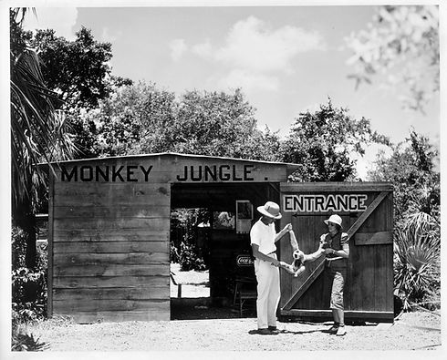 Monkey Jungle | Established 1935 | Joseph DuMond | Animal Behaviorist | Historic Landmark | Wildlife Park | Tourist Attraction | Miami & South Florida