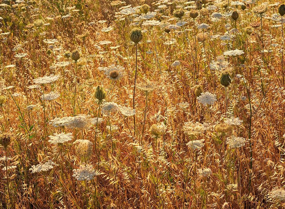 Mixed grasses in sunlight in Sardinia, Italy