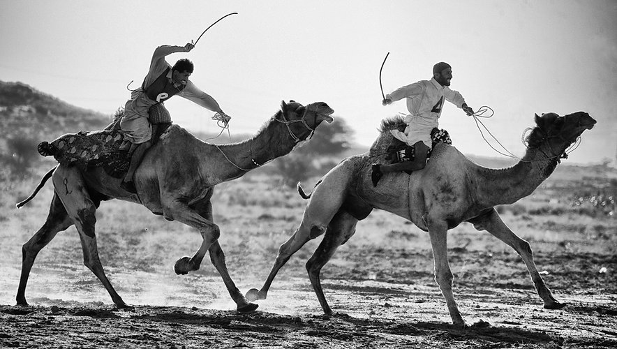 Camel race - Rajasthan desert