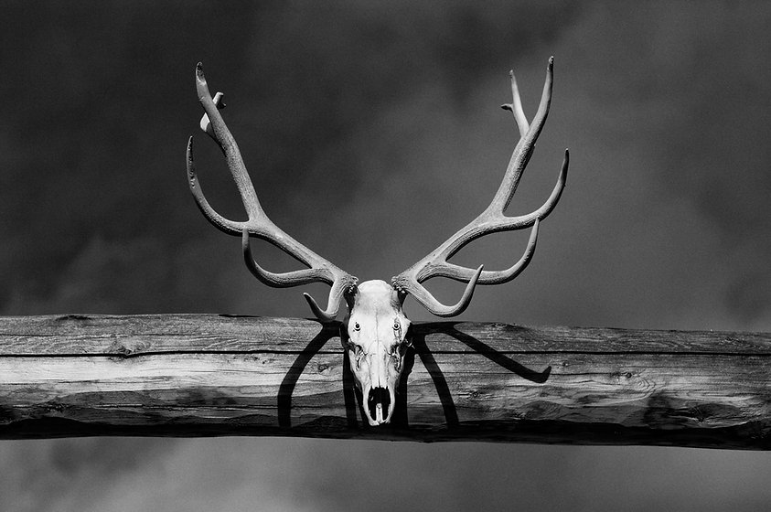 Antlers over a ranch gate in Colorado