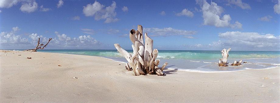 Cloudy Bay- Carribean