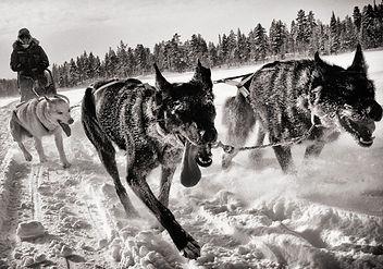 Dog sledding in Kiruna, Sweden