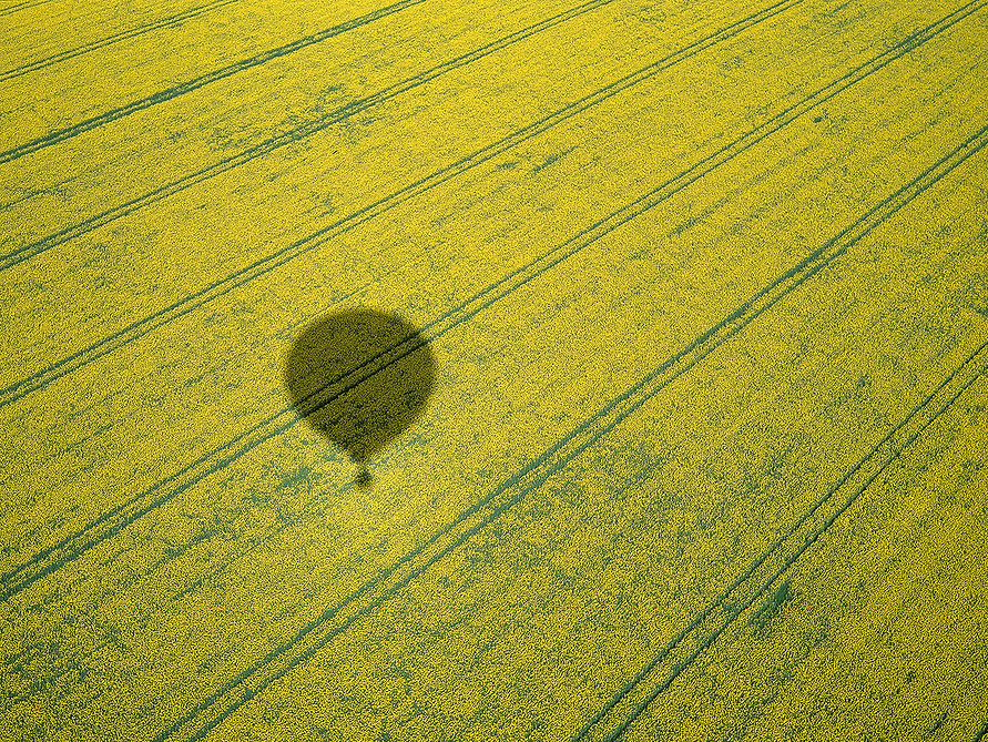 Parallel Lines in a field with a hot air baloon shadow.jpg