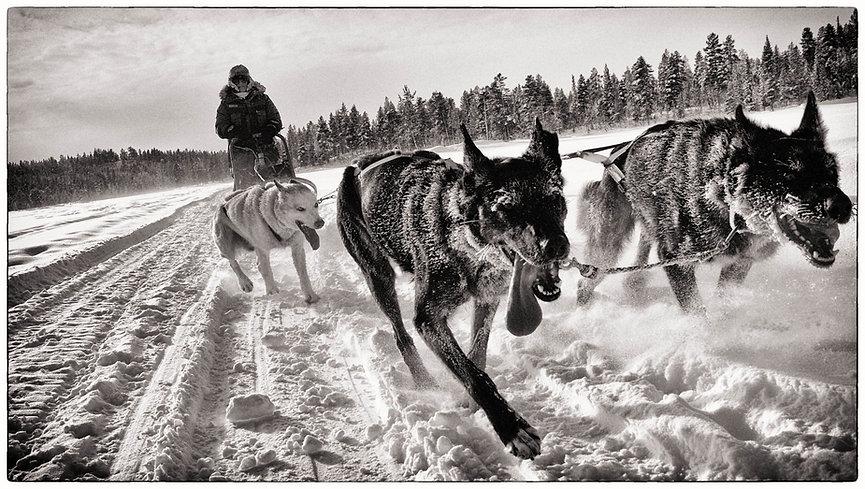 Dog sled team KIruna, Sweden